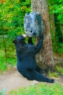 animals14